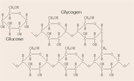 Glycogen and glucose